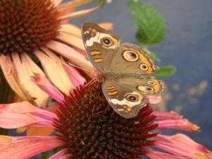 聖塔巴巴拉舞彩繽紛的花蝴蝶~~~那色彩美得令人~~~~
